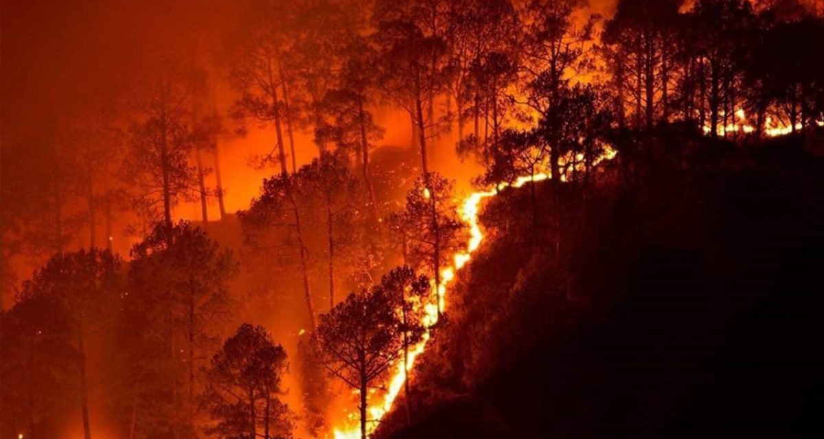 California needs its forest fires. Just not the kind burning right now.