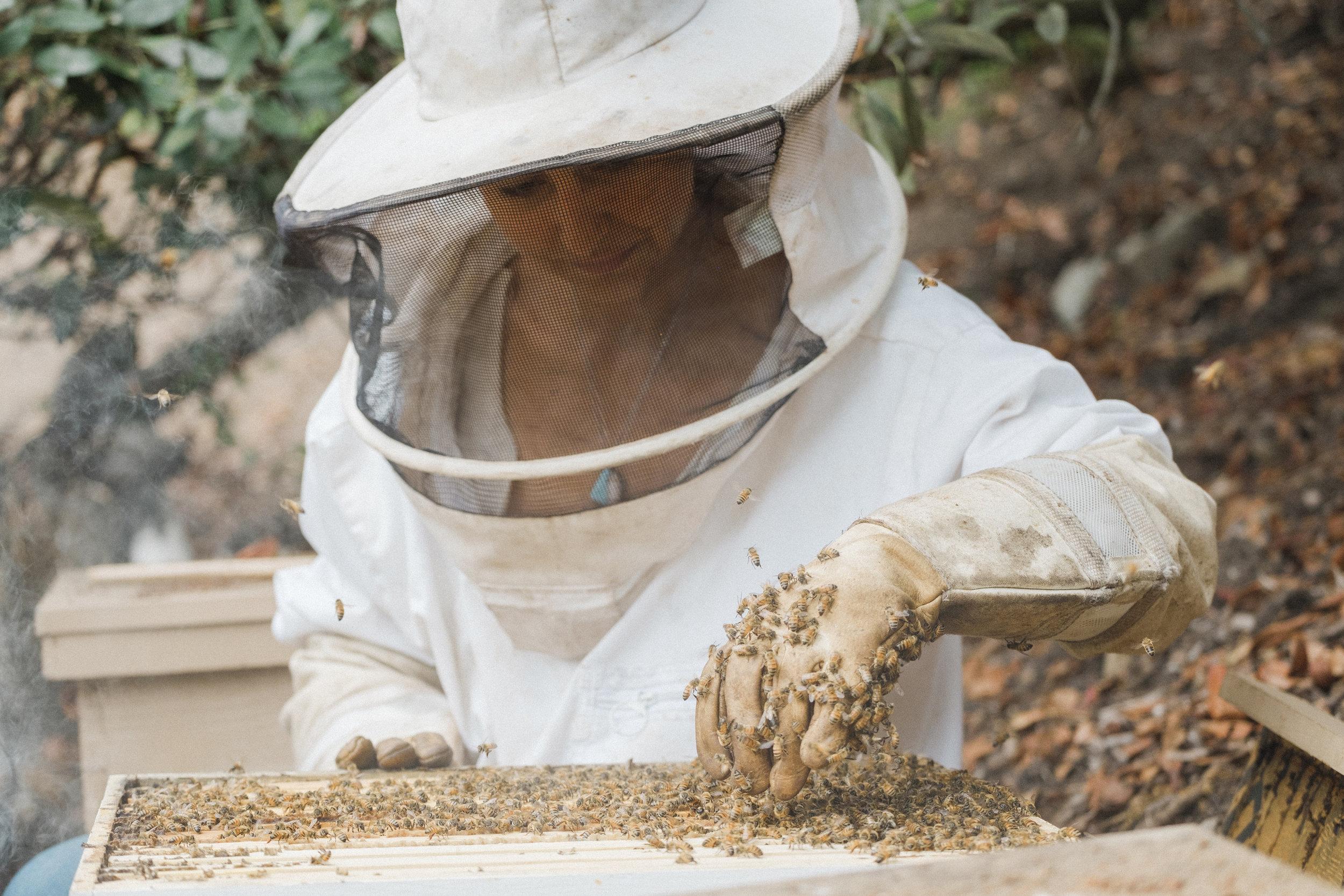 Anna-Maria Beekeeper